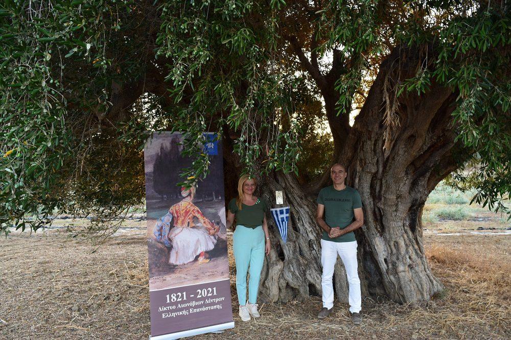 Δρ. Αυγερινοπούλου, στην πρώτη επετειακή εκδήλωση σήμανσης της υπεραιωνόβιας ελιάς στην Ηλεία